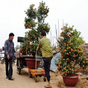 xe nâng mặt bàn 150kg giá rẻ cho nhà vườn