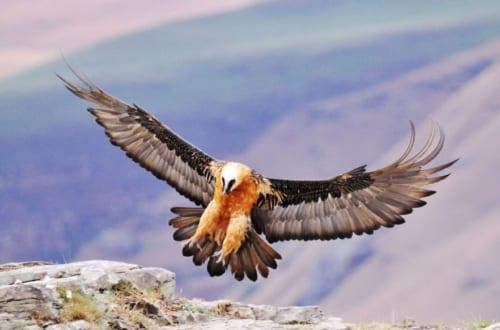 Bạn Có Biết 10 Loài Chim Bay Cao Nhất Thế Giới?