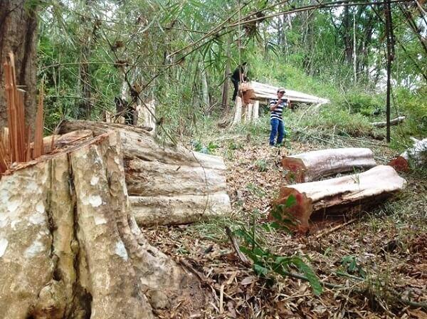 Không chỉ là sạt lỡ, lũ lụt...mà còn hàng trăm vấn đề khác khi phá rừng bừa bãi