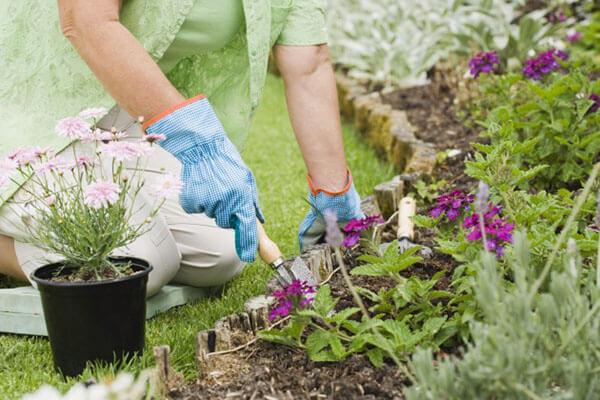 Bón phân ngoài việc cung cấp dinh dưỡng còn giúp đất tơi xốp dễ hấp thu hơn