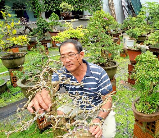 Tắt tỉa và tạo hình cho cây luôn được nhà vườn chú trọng nhât